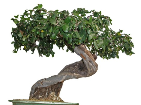 Reputacion-On-line-Bonsai-Victor-Puig-en-Blog-Original-Community-Manager-1024x768